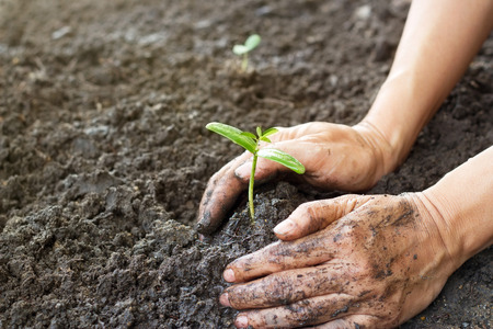 soil: Woman hand watering and protect young tree on soil background ,Ecology concept