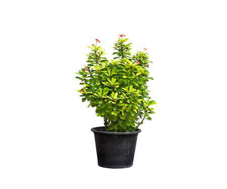 flower pot: green plant and flower in flowerpot on isolated background