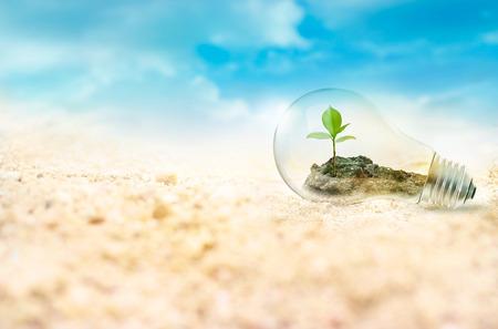 Glühbirne mit grünen Baum im Inneren auf Wüste Hintergrund, Umwelt-Konzept Standard-Bild