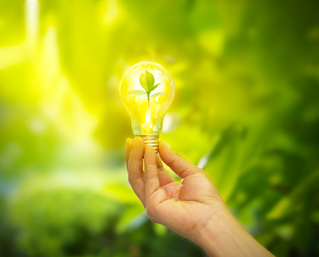 save electricity: hand holding a light bulb with energy and fresh green leaves inside on nature background, soft focus