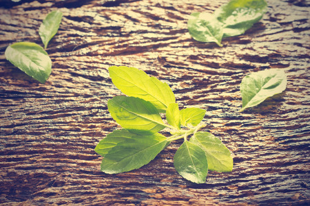 wooden color: Fresh organic basil leaves on rustic wooden background, vintage color tone