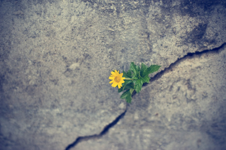 yellow flower growing on crack grunge wall, soft focus Foto de archivo