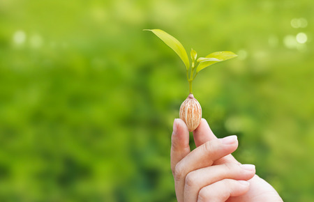 hands holding plant: human hands holding plant growing from seed on green nature background, blank text Stock Photo