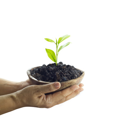 earth nut: Woman hand protect young tree on soil in wooden bowl on isolated white background ,Ecology concept