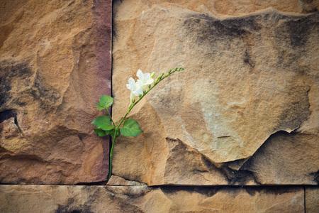 흰 꽃 균열 돌 벽에 소프트 포커스 성장, 빈 텍스트