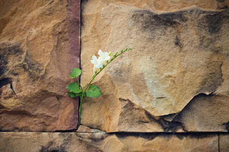 white flower growing on crack stone wall soft focus, blank text