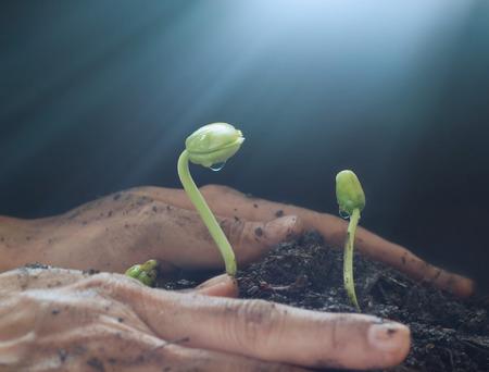 mano de dios: Mujer riego manual y proteger �rbol joven en el fondo del suelo, Ecolog�a concepto