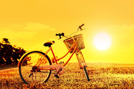 flowers summer: colorful bicycle on flower field on sunset background, warm color tone Stock Photo