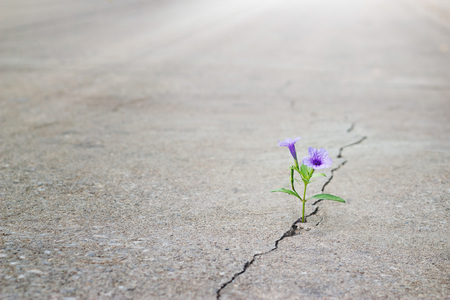purple flower growing on crack street, soft focus, blank text