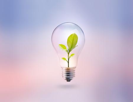파스텔 배경 위에 에너지와 신선한 녹색 잎 전구 스톡 콘텐츠
