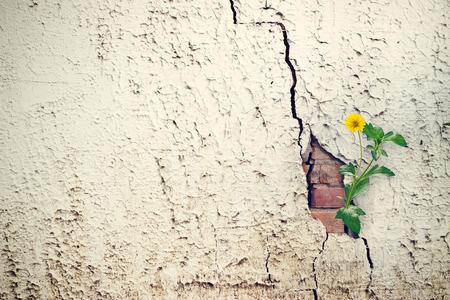 gele bloemen groeien op barst grunge muur, soft focus