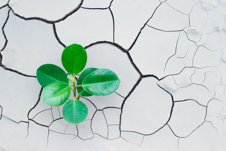 tree growing on cracked earth, save the world, environment concept Imagens - 55377786