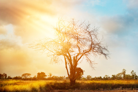 africa tree: dead tree on colorful sunset background Stock Photo