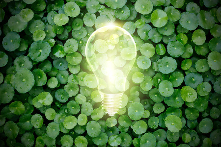 leaf water: Light bulb light up in the green plant, Ecological concept Stock Photo