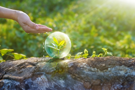 environmental: hand watering and protecting globe of young tree resting on a timber, environment concept Stock Photo