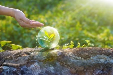 la mano de riego y la protección de globo de reposo árbol joven en una madera, el concepto de medio ambiente