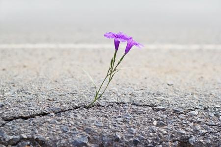 균열 거리, 소프트 포커스 성장 보라색 꽃 스톡 콘텐츠