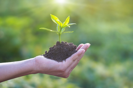 Human hand holding young plant with soil on nature background, Ecology, Investment, CSR, New Life concept Stock Photo
