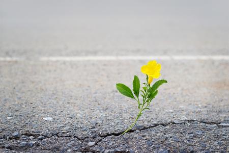 crack: yellow flower on crack street, soft focus
