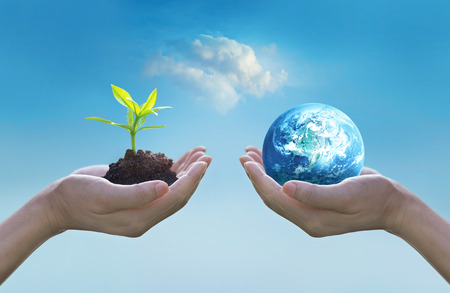 Holding earth and green tree in hands, world environment day concept, saving growing young tree, Standard-Bild