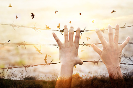 Hands of wire prison with bird flying on sunset sky background Stock Photo