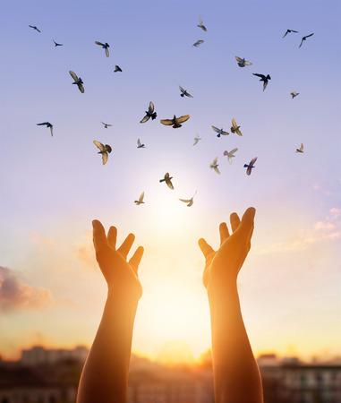 Mujer que ora y pájaro libre disfrutando de la naturaleza en el fondo la puesta del sol, el concepto de la esperanza Foto de archivo