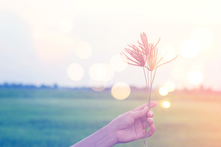 flowering field: Hand of woman hold flowering grass while relaxing in the paddy field, pastel color and filter image