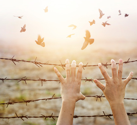 Woman hands hold the rusty sharp bare wire with hope longing for freedom among flying birds, Human rights concept Stockfoto