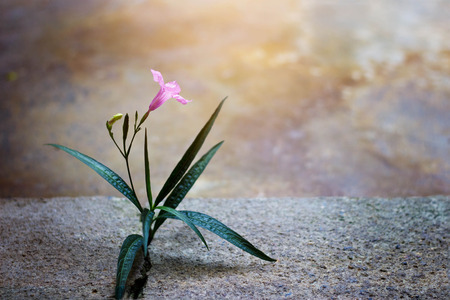 renew.: Pink flower growing on crack street, soft focus, blank text