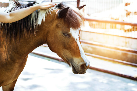 Woman hand gently stroked the horses mane. Stock Photo