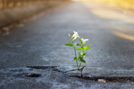 white flower growing on crack street, soft focus, blank text Imagens
