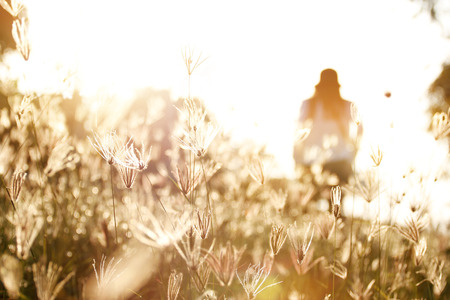 woman in field: Woman in field of grass during sunset, soft focus
