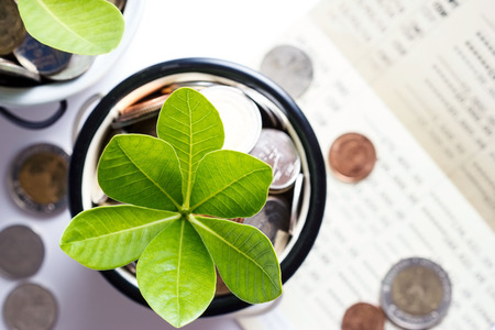 Boom van munten vertegenwoordigd besparingsgeld en het groeien van zaken. Financieel en bankconcept