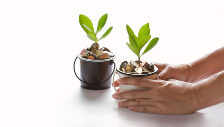 Hands protect growing plant of coins represented saving money growing up. Business, finance and banking concept Stock Photo