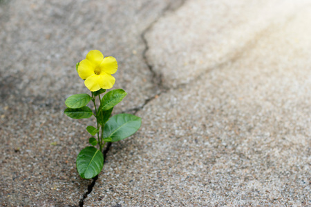 Yellow flower growing on crack street, hope concept