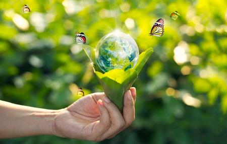 Einsparungsenergiekonzept, Tag der Erde, Hand, die Erde in der Glühlampe gegen Natur auf grünem Blatt mit Schmetterling auf grünem Parkhintergrund hält.