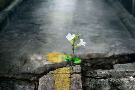white flower growing on crack street, soft focus, blank text Banque d'images