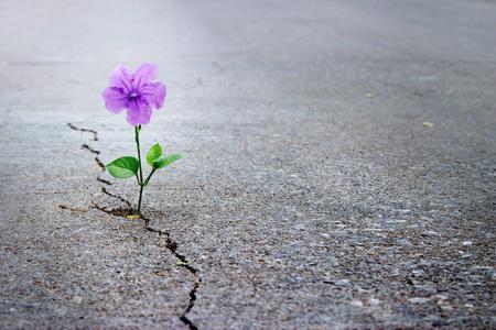 Purpurowy kwiatu dorośnięcie na crack ulicie, miękka ostrość, pusty tekst