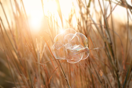 Bubble on grass at sunset background