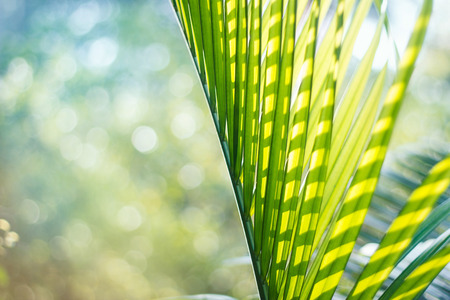 Green palm leaf on colorful summer background