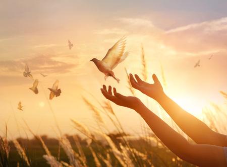 Kobieta modląc się i wolny ptak z przyrodą na tle zachodu słońca, koncepcja nadziei