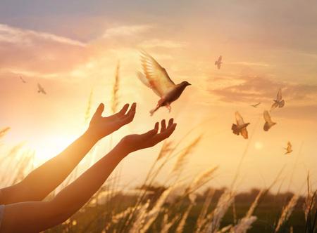 Mujer rezando y pájaro libre disfrutando de la naturaleza en el fondo del atardecer, concepto de esperanza