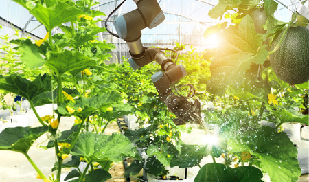 Artificial intelligence. Pollinate of fruits and vegetables with robot. Detection spray chemical. Leaf analysis and oliar fertilization. Agriculture farming technology concept. Foto de archivo - 106923787