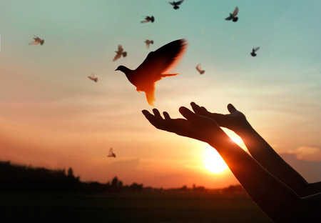 Woman praying and free bird enjoying nature on sunset background, hope concept Stockfoto