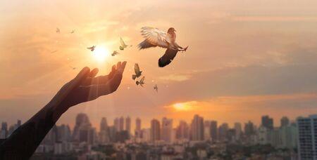 Hands of woman praying and free bird enjoying nature on city sunset Imagens
