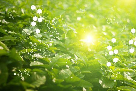 Biologielabor Natur und Wissenschaft, Pflanzen mit biochemischer Struktur auf grünem Hintergrund. Standard-Bild