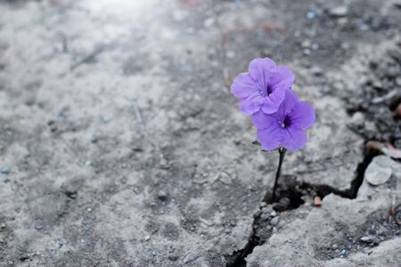 Purple flower on crack street background.