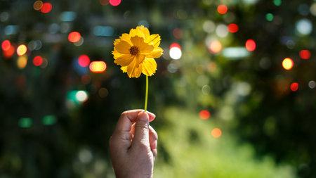 Flower blooming in hand on summer nature background 版權商用圖片 - 161884076