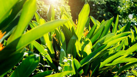 Colorful flower and leaf with sunlight on summer tropical foliage nature background 版權商用圖片 - 161884080
