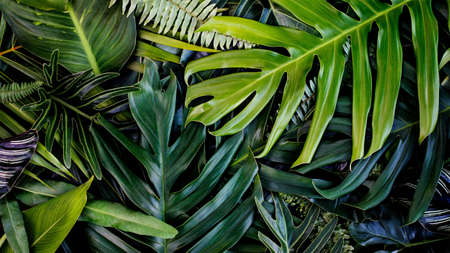 Creative design of leaves, Tropical leaf, Nature background and abstract green leaf texture, Nature concept. 版權商用圖片